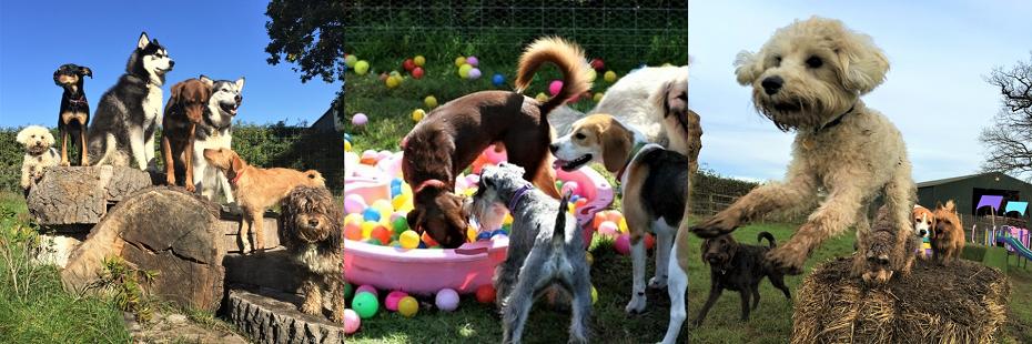 Dog Walking Prices Wimbledon