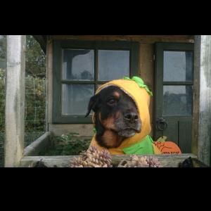 Dog Daycare Halloween